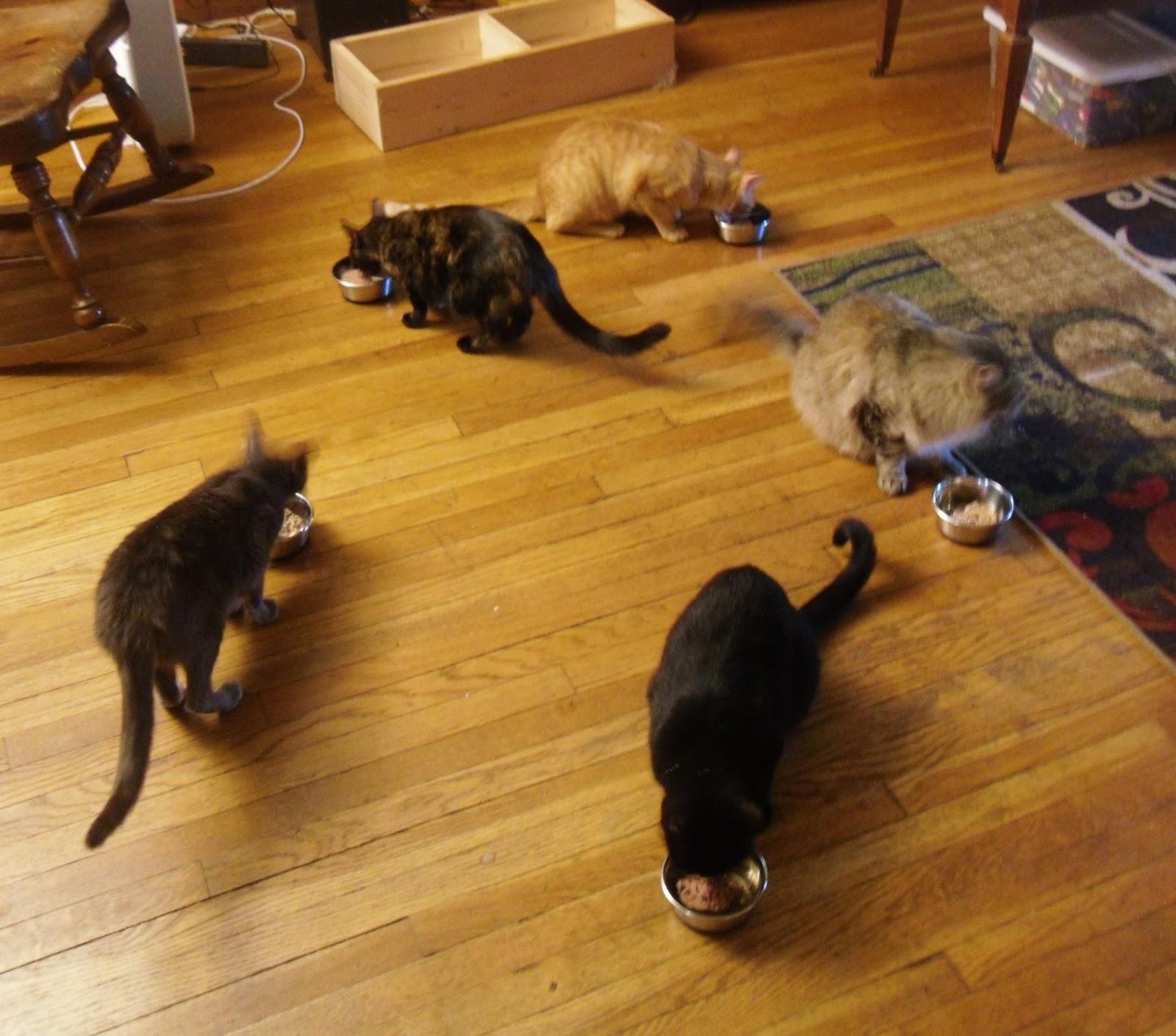 Ivm Cat Food