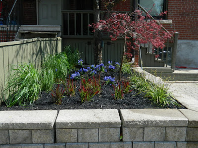 Roncesvalles Village Toronto new garden installation after by Paul Jung Gardening Services Inc