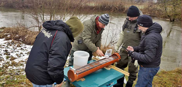 Stocking Brown Trout Eggs
