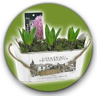 jacintos-en-barcelona-barnaplant-y-arribas-center