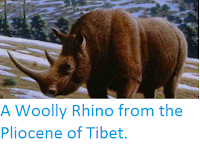 http://sciencythoughts.blogspot.co.uk/2011/09/woolly-rhino-from-pliocene-of-tibet.html