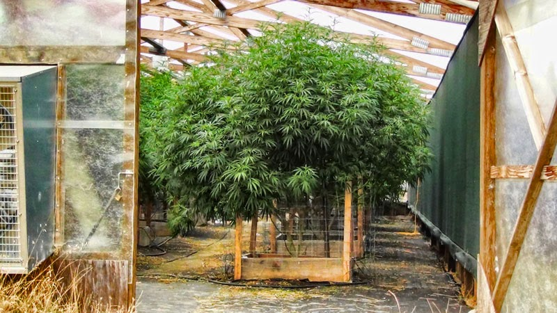 All Medical That Is Grown Outdoors In This State Must Comply With Michigan House Bill 4851 Which Amended The Mmma