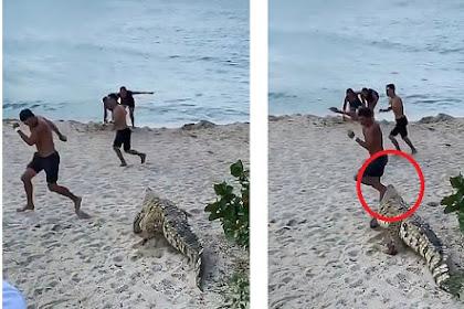 Detik-detik Wisatawan Lari Ketakutan Saat Buaya Muncul dan Berjalan di Pantai