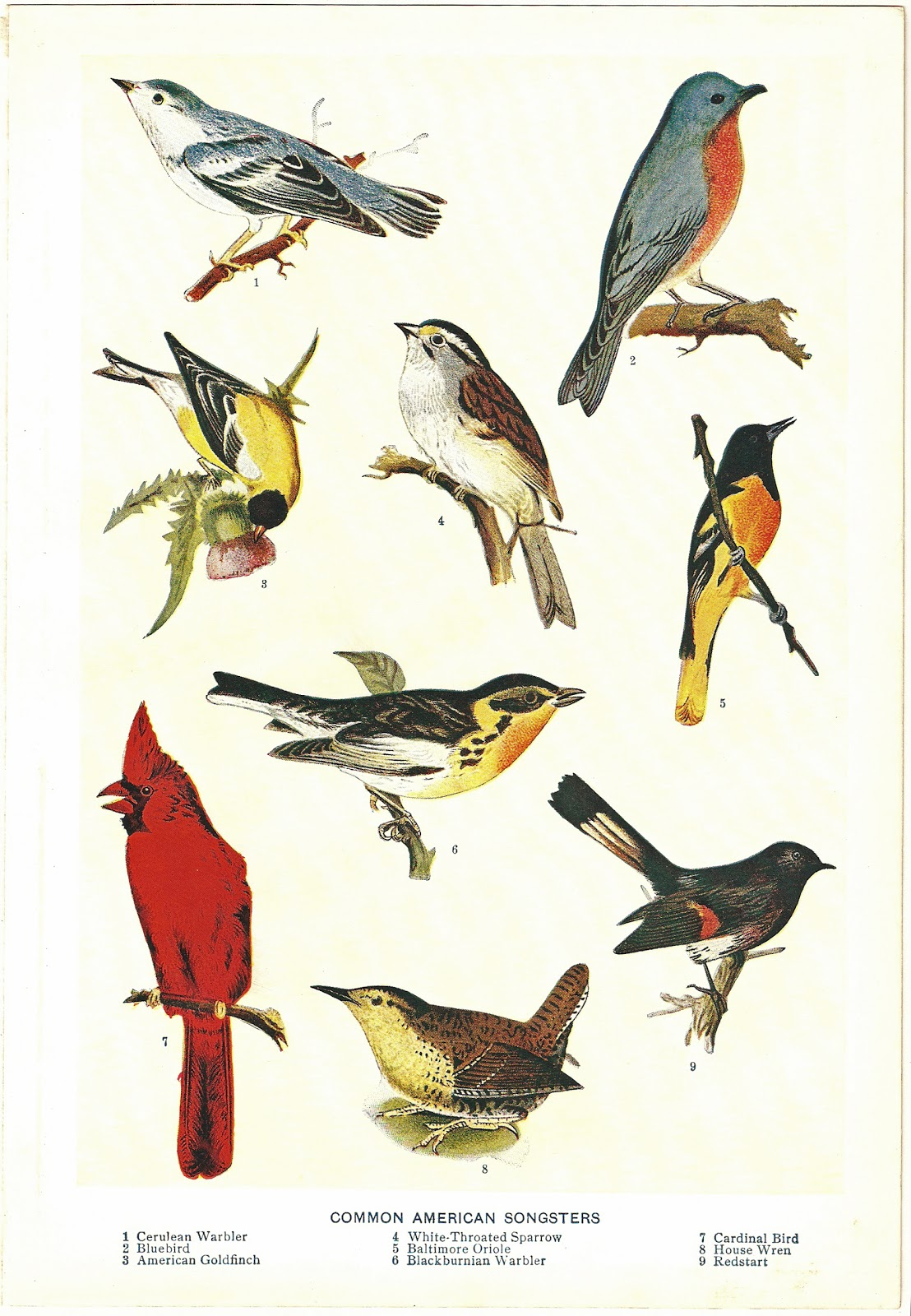 free clipart of vintage birds - photo #30