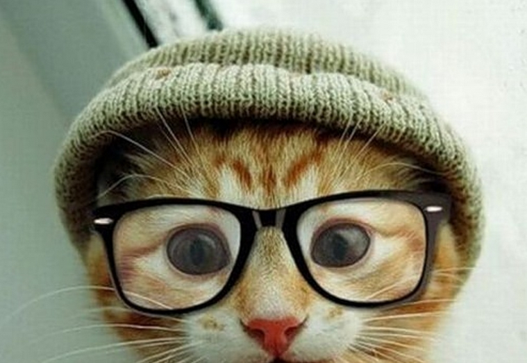 Chat cute lunettes hipster