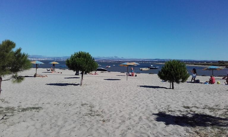 Árvores Praia Fluvial Samouco