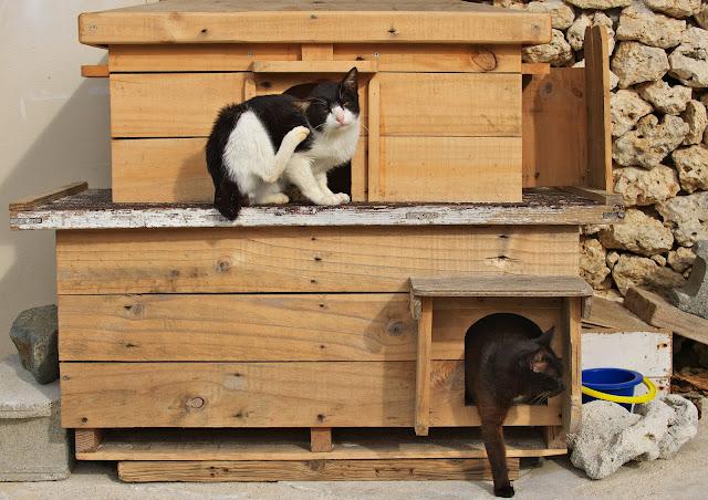 猫の家の写真