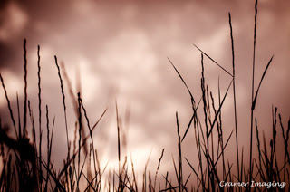 Professional quality nature photograph of sepia toned wild grass against sky and clouds in Tetonia, Teton, Idaho by Cramer Imaging