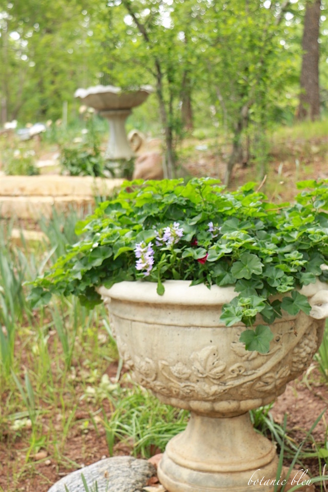 french-design-urn-with-trailing-geraniums