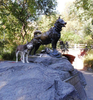 Statue of Balto, the lead dog of the final sled team that delivered life saving antitoxin to Nome, Alaska
