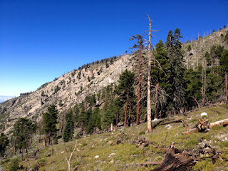 View southwest toward Islip Ridge from Big Cienega Trail, Crystal Lake, Angeles National Forest