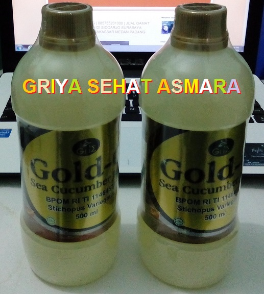 jelly gamat gold g meningkatkan vitalitas pria gsa agen herbal
