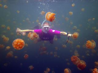 http://www.allfiveoceans.com/2016/04/jellyfish-lake-of-palau.html
