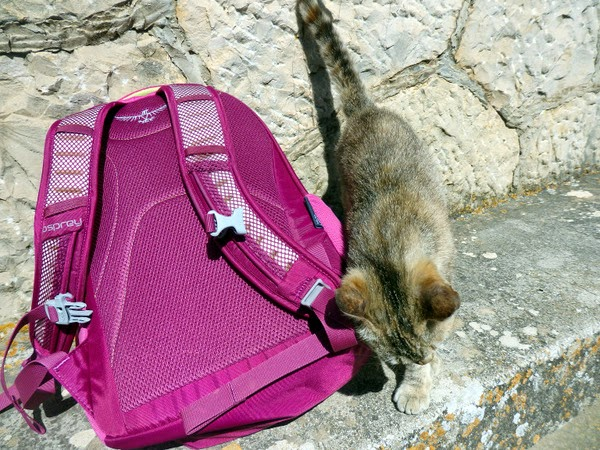 cat and rucksack