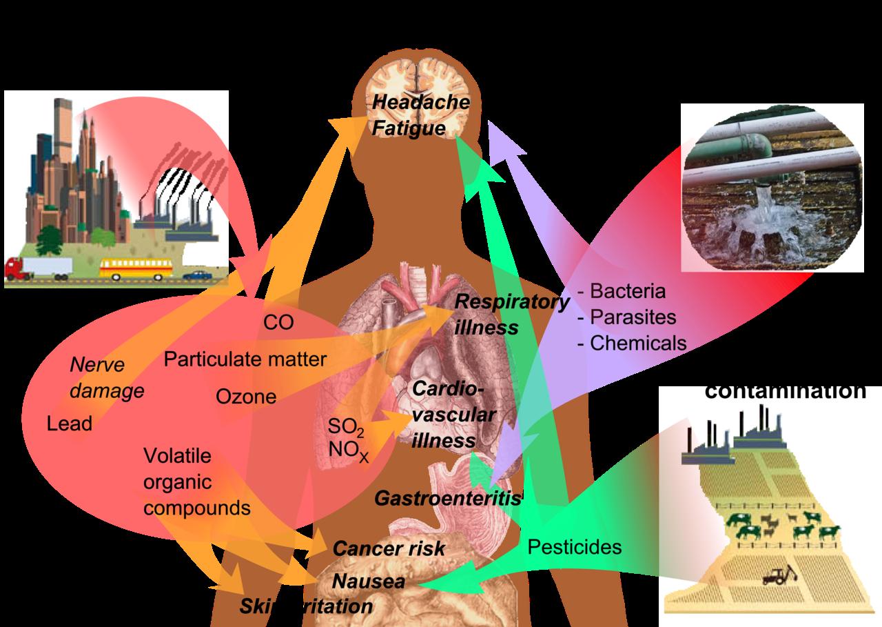Impact of Plastics on Human Health