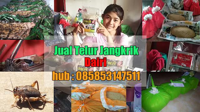 Jual Telur Jangkrik Dairi Hubungi 085853147511