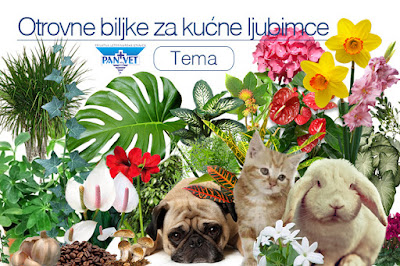 Otrovne biljke za kućne ljubimce Panvet Subotica