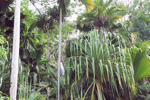 Naturschutz Seychellen (C) JUREBU
