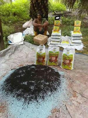 Cara aplikasi Supernasa granule pada sawit,cara pemupukan kelapa sawit,pupuk organik untuk sawit,,pupuk untuk meningkatkan panen sawit,pupuk untuk sawit terbaik ,Cara aplikasi Supernasa granule pada sawit