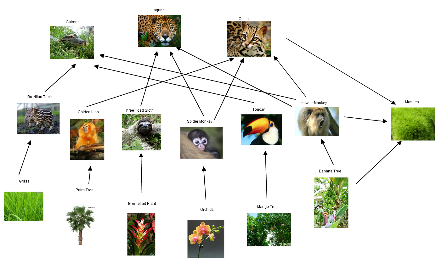 Tropical Rain Forest Travel Blog Day 4 Food Web And Pyramid