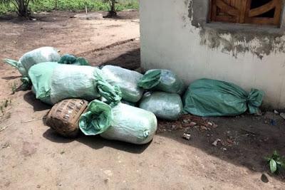 Polícia Federal descobre 'esconderijo secreto' de  172 kg  de maconha em cidade da Paraíba
