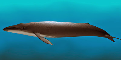 Baleia azul - maior animal do mundo