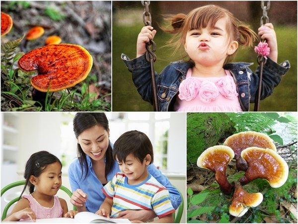Trẻ em sử dụng nấm linh chi khỏe mạnh và thông minh.