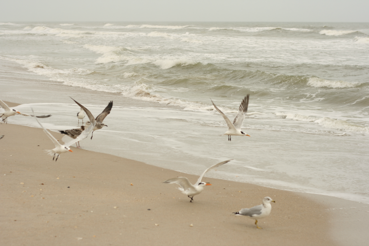 florida seagulls ethical writers co earth day