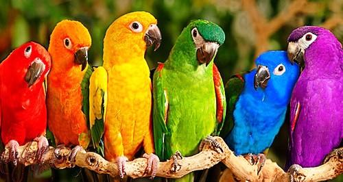 aves%2Bexoticas%2Bdel%2Bamazonas%2By%2Bdel%2Bmundo3 - Animales Vertebrados Definición
