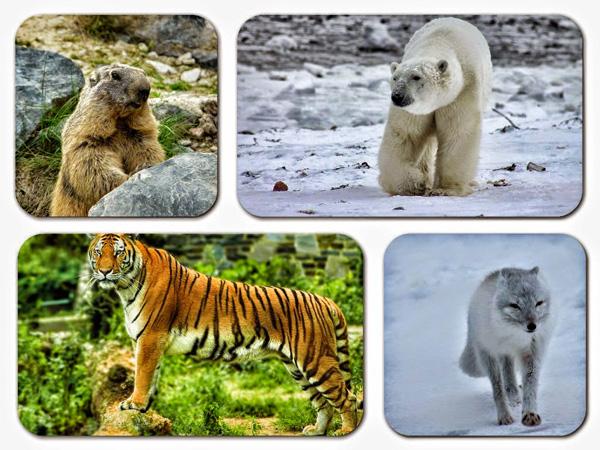 http://ticsenfle.blogspot.com.es/2015/04/les-animaux-victimes-du-changement.html