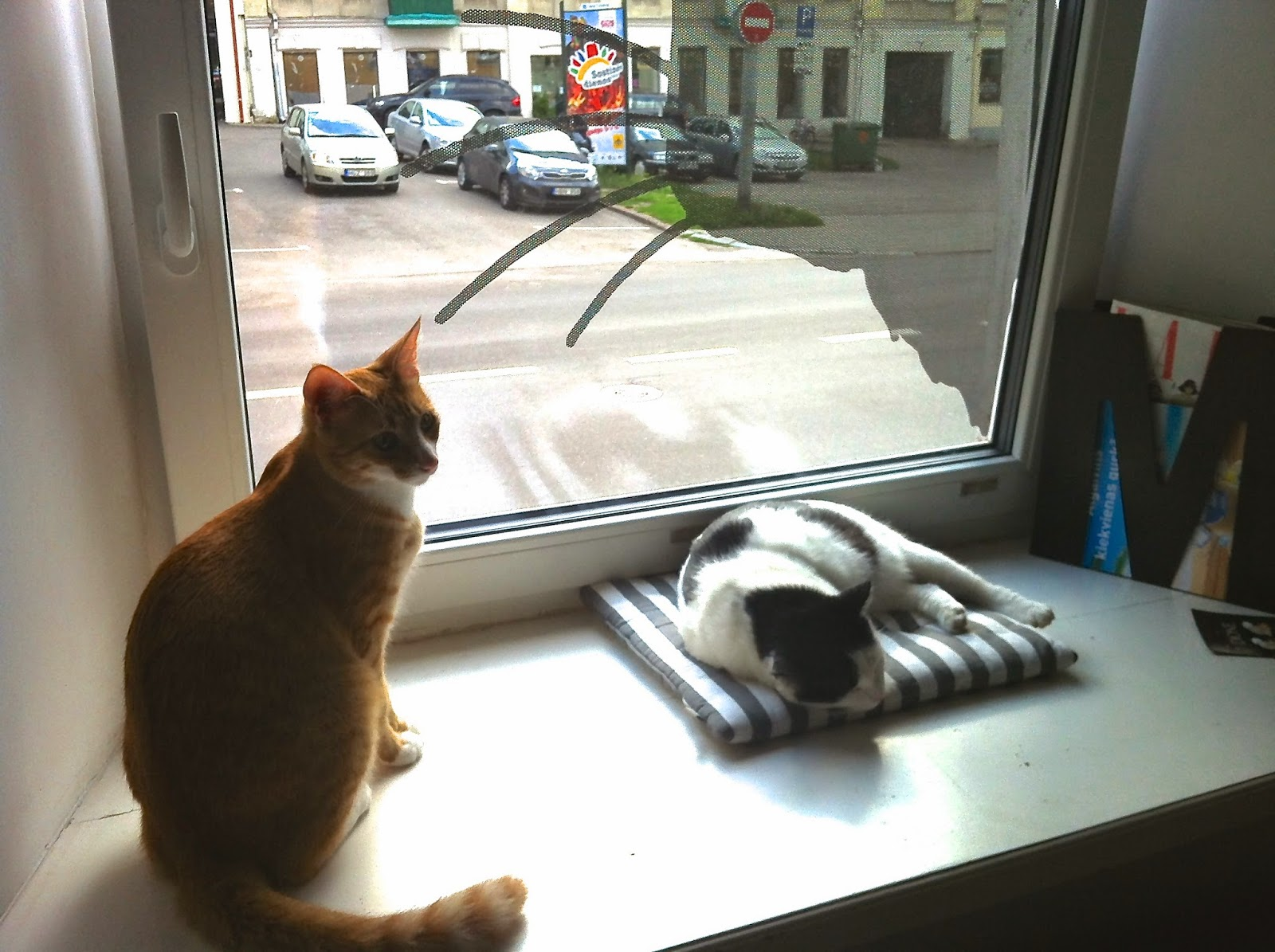 cats by the window in the cat cafe