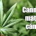 Los Estados Unidos acaban de admitir que el cannabis SÍ mata células cancerígenas.