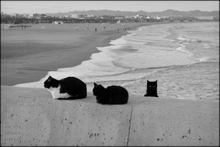 gatos,calendario,playa,fotografia,2018
