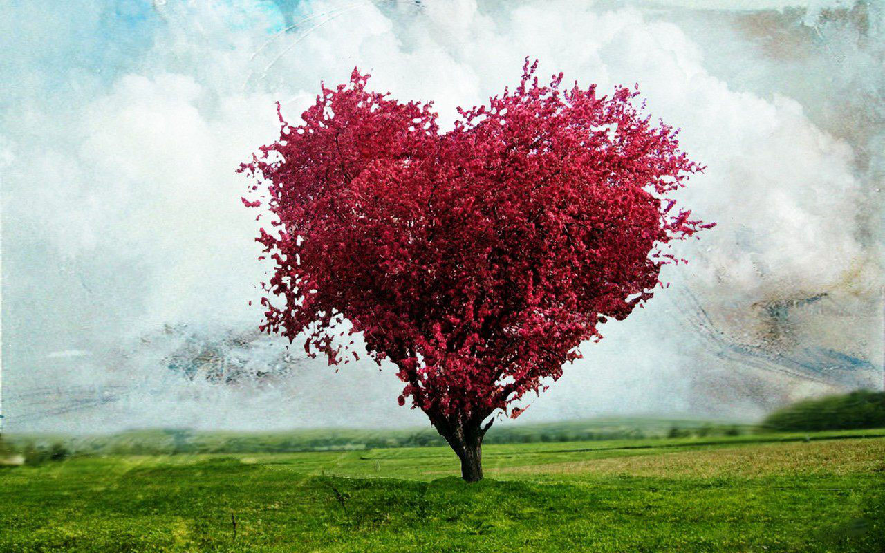 Pink love heart tree with nature background hd wallpaper - Love nature wallpaper hd ...