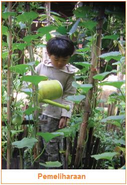 Pemeliharaan - Tahapan-Tahapan Budi Daya Tanaman Sayuran
