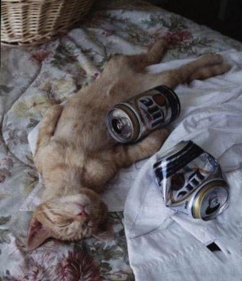 Khi động vật là bợm nhậu hay say xỉn