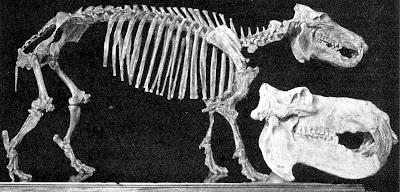 hipopotamo malgache enano Hippopotamus lemerlei