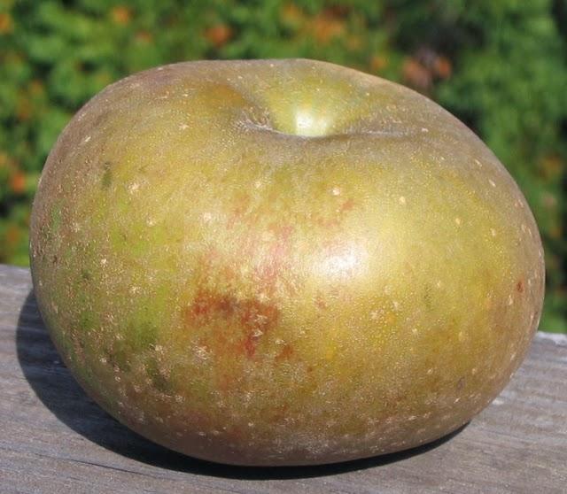 Adam's Apples: Zabergau Reinette *