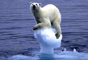 Oso quedándose sin hielo, foto por el Día Meteorológico Mundial