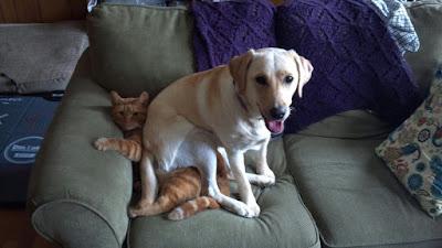 Perros sentados encima de gatos