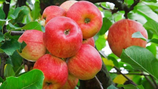 ¡Conozca el peligro que se esconde dentro de las manzanas!