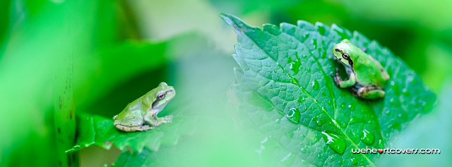 Green Frogs on leaves Facebook covers - Weheartcovers.com