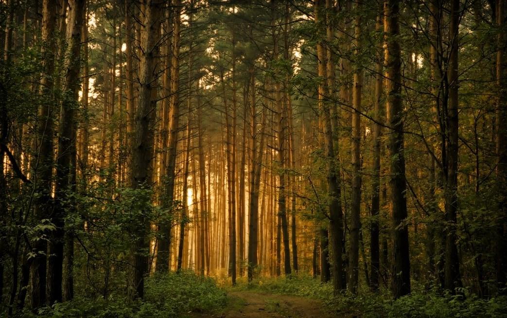 Tampil cantik dalam hutan Fotografi Foto Landscape dengan Hutan Yang Luar Biasa Cahaya dan Backligth Indah