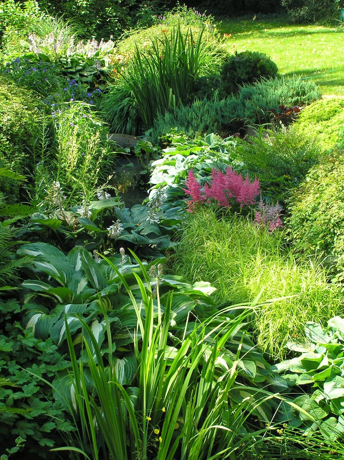 rów melioracyjny w ogrodzie