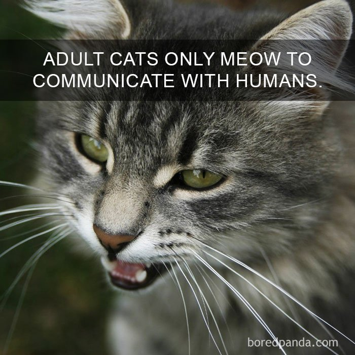 10+ Amazing Cat Facts That You Probably Didn't Know