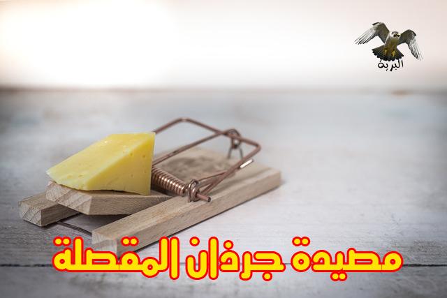 كيفية صيد الجرذان وطريقة التخلص من الجرذ بعد صيده وشراء المصيدة المناسبة لصيد الجرذان Rat - Mouse Trap