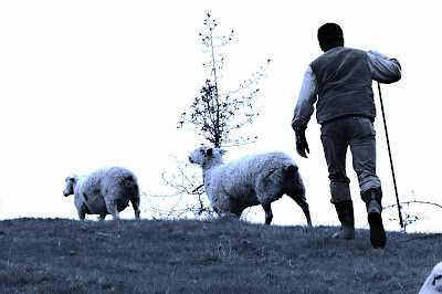 A Shepherd's Vocabulary