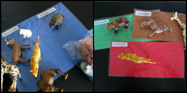 Mammal Sort First Grade