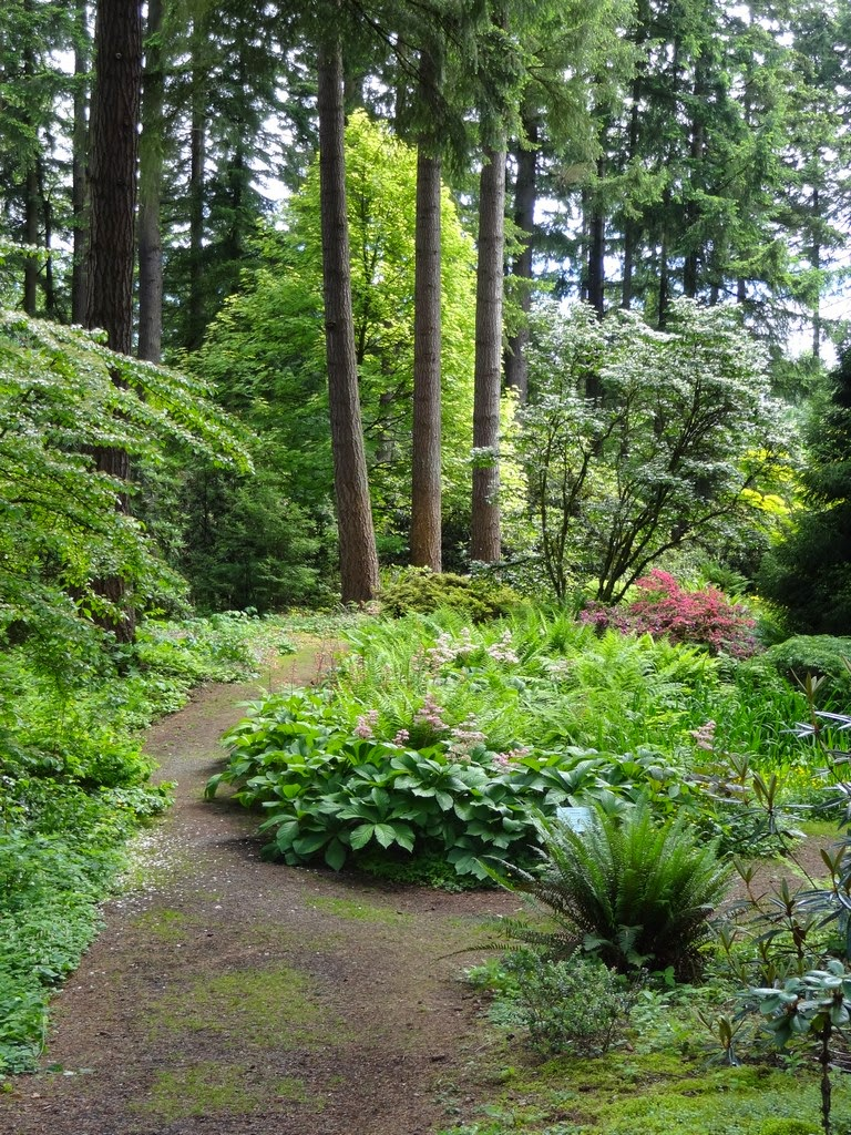 Flora Wonder Blog: Companion Plants In The Rhododendron