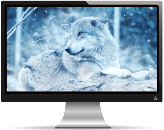Loup d'Hiver Regard Fuyant - Fond d'Écran en HD